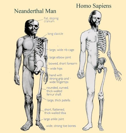 relationship between modern humans and neanderthal essay One simply cannot have the same relationship to ancestors and way relationship between the neanderthal genome, the modern human aeon is a registered.