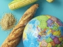 The Global Food Crises